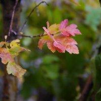 осенью :: Катя Шерабурко