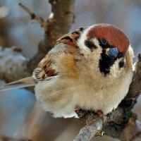 Кстати о птичках... А может про известного героя... :: Александр Резуненко