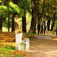 Скамеечка в парке. :: Владимир Гилясев