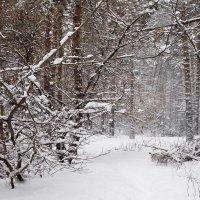 Потерял февраль в лесу метели... :: Лесо-Вед (Баранов)