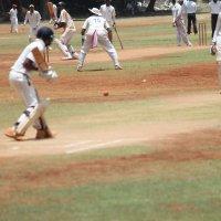 Хороший удар Крикет :: maikl falkon