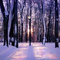 Зима в Остафьево :: IS_Irin .
