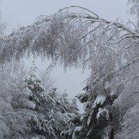 зимняя весна :: Yana Odintsova