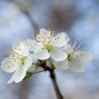Весна настала! :: Елена Нор