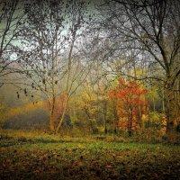 Воспоминания об осени :: Анна Браун