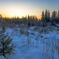 Вечерний лес :: Анатолий Иргл