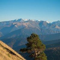 Уединение в горах :: Марина Фадеева