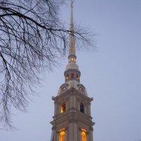 Колокольня Петропавловского собора :: Вера Щукина