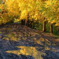Золото и грязь :: Андрей Майоров