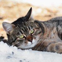Я на солнышке лежу...... :: Sergey (Apg)