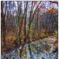 Просто лужа на лесной дороге, засмотрелся и намочишь ноги. :: Dmitriy Kulnev