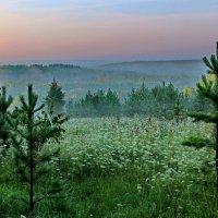 Туманное летнее утро. :: Пётр Сесекин