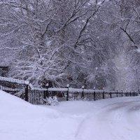 Что происходит на свете, а просто зима.... :: Галина Чепиль