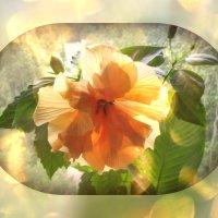 моя роза :: tgtyjdrf