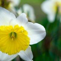 Солнечный цветок :: Елена Нор