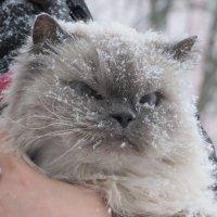 замело кота )))) :: валя