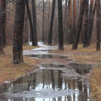 Весна пришла... :: Laborant Григоров