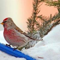 Райская пташка :: И.В.К. ))