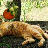 Апельсиновый кот :: Кай-8 (Ярослав) Забелин