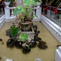 Бассейн с черепахами :: Witalij Loewin