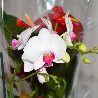 орхидея :: Sergej