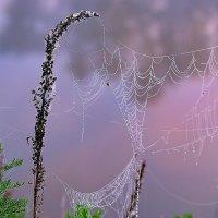 Сиреневый туман... :: Валерий Лазарев