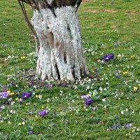 Весной цветет земля... :: Galina Dzubina