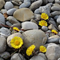 Весна...Сила жизни... :: Galina Dzubina