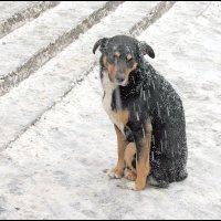 эххх...жизнь собачья.. :: Gavrila68 -Женя