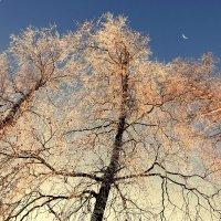 Зимний пламень в небе голубом :: Валерий Талашов