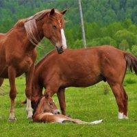 Простое лошадиное счастье :: Сергей Чиняев