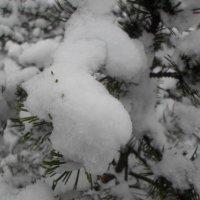 Снова снег... :: BoxerMak Mak