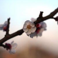 Весна. :: Береславская Елена