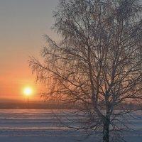 Уже зажгли солнечный фонарь :: Нина Штейнбреннер