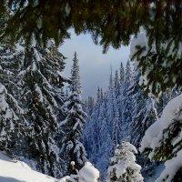 Зима :: Владимир Клюев