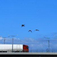 утки в полете :: linnud
