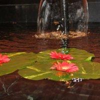 цветы на воде :: maikl falkon