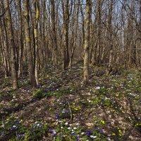 Весна пришла с цветами :: Константин Николаенко