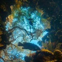 Коралловый рай :: Юрий Вайсенблюм
