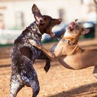 Собачьи войны 3 :: Михаил Дорошенко