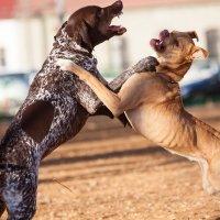 Собачьи войны 2 :: Михаил Дорошенко