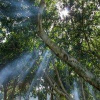 лучи солнца :: Адик Гольдфарб
