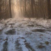 На весенней дороге. :: Laborant Григоров