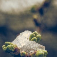 цвет во льду :: Максим