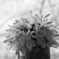 Черно-белая весна ... :: Ольга Винницкая