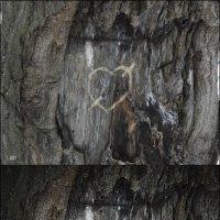 чей-то рисунок на дереве... :: Юлия Денискина
