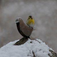 Две птички :: Елена Шел