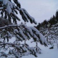 февраль :: Наталья Зимирева