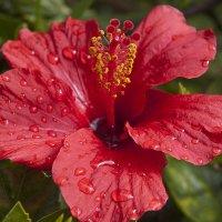 После дождя :: Светлана marokkanka