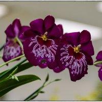 Архидеи. Ботанический сад. 4. :: Jossif Braschinsky